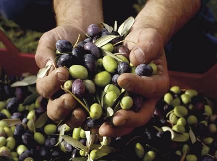 地中海饮食金字塔突出了主要食物群组的重要性